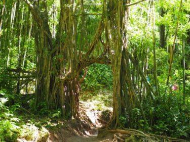 マノアの滝に挑戦!〜子どもだと滝まで何分かかる?〜ーハワイオアフ島ー
