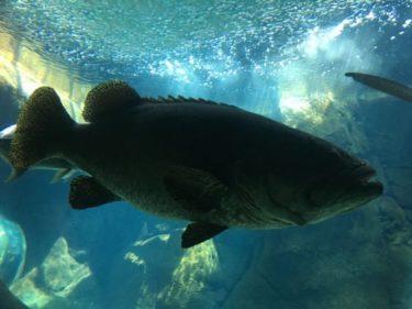ハワイのワイキキ水族館に行ってきた!巨大シャコガイにビックリ!