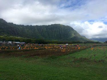ワイマナロカントリーファームでパンプキンパッチ!【ハワイでハロウィン②】