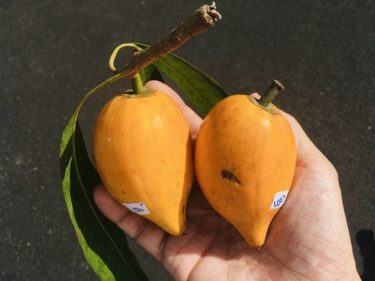 ハワイで見つけた「エッグプラント」を食べてみる〜ハワイの食材14〜