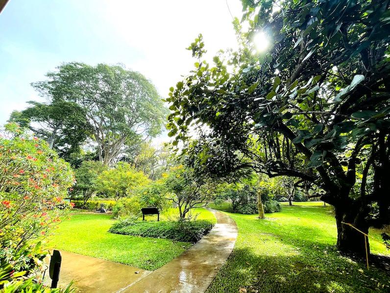 雨上がりのフォスター植物園
