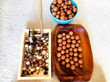 庭でとれたハワイ産マカデミアナッツを割って食べてみる!〜ハワイの食材18〜