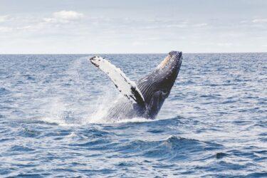 【クジラをめぐる冒険1月編】マカプウトレイルからホエールウォッチング!クジラ見えた?
