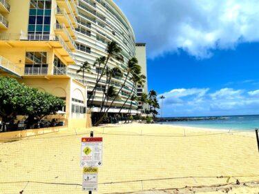 ハワイアンモンクシールの赤ちゃんがワイキキのビーチに。見に行ってきました!