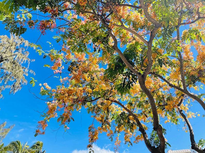 カピオラニビーチパークのシャワーツリー